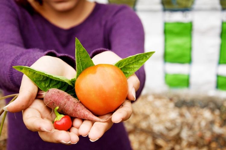 A gardener holds a harvest of vegetables at Danbury Community Garden